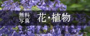 無料写真素材花・植物