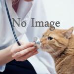 動物病院画像なし