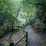小布瀬の滝道のり (2)