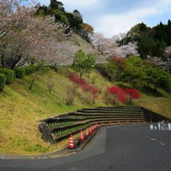 天ヶ城公園桜