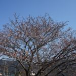 現在の開花状況 (2)